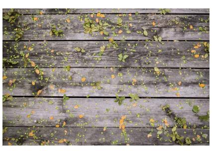 deck maintenance and repair